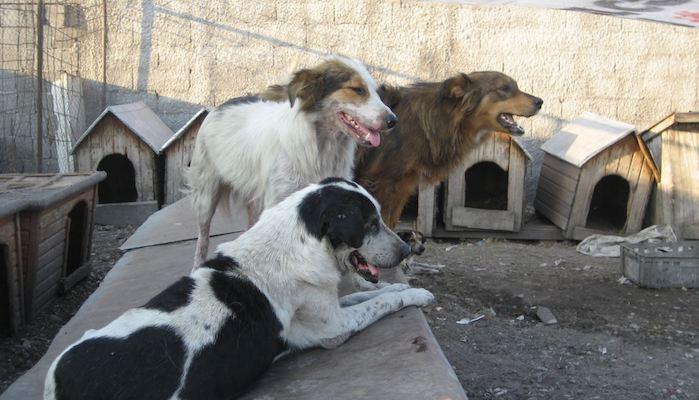 Verbesserung der Situation im Auslandtierschutz vor Ort.