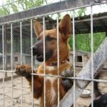 Fuchs- Mädchen sucht ein Zuhause