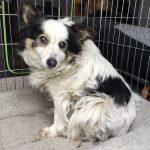 Bonny startet in ihr zweites Leben und sucht Unterstützer!